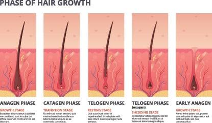 Crecimiento normal del pelo