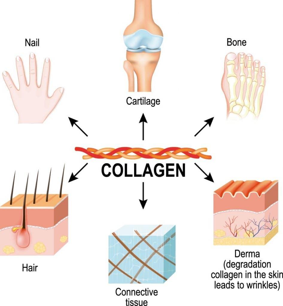 El colágeno para el pelo, complemento compatible con VIPELIN
